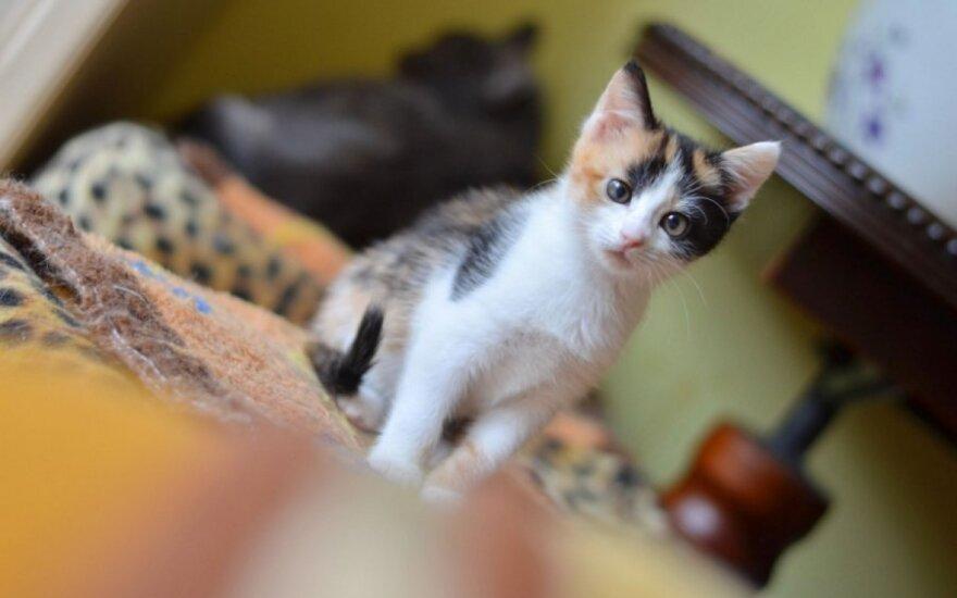 Be galo žavinga trispalvė Coliukė svajoja apie savo namus!