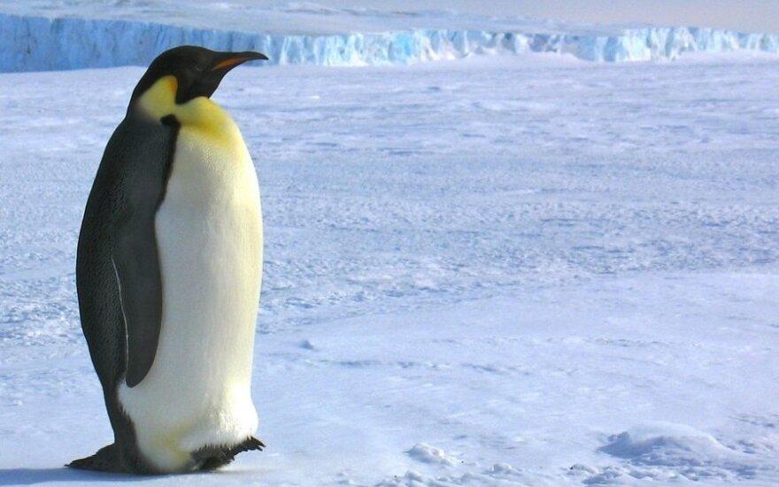 Antarktida tampa turistų rojumi