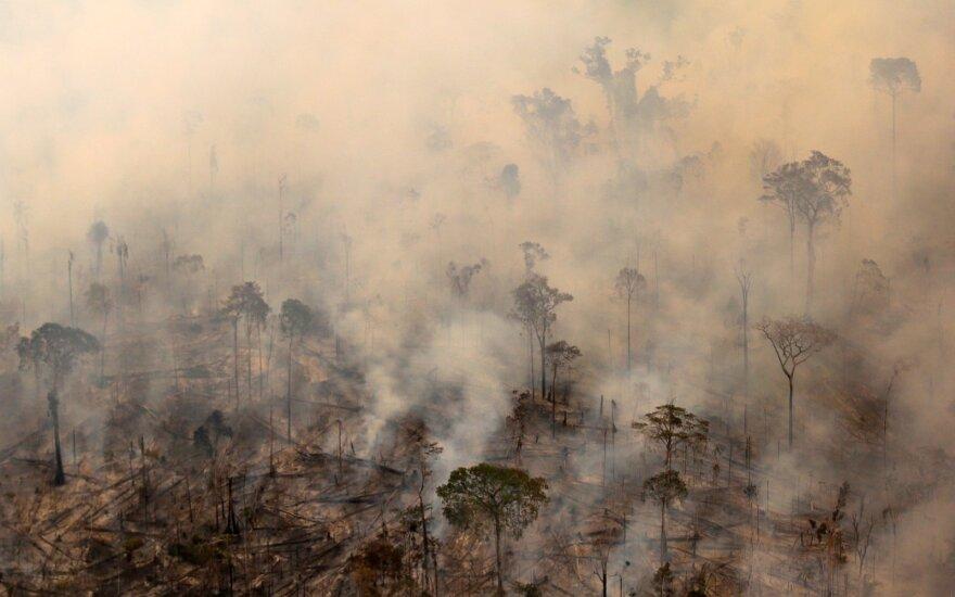 Amazonės gaisrai