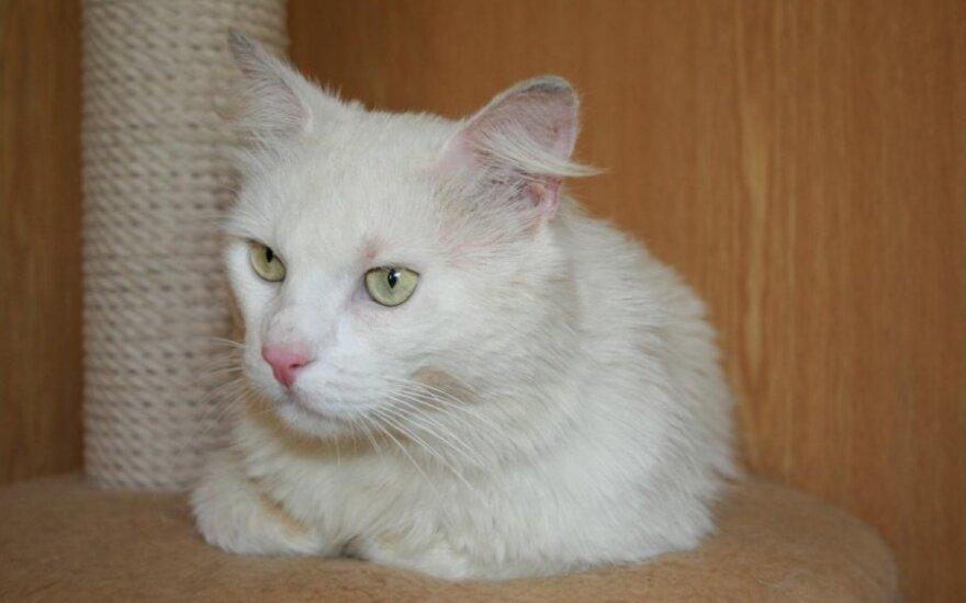 Katinėlis Tučis – labai labai norime namų