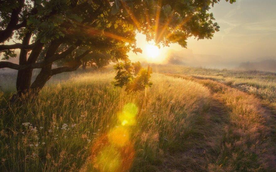Kiek žmonių pasirinko mišką kaip kompensaciją už mieste turėtą žemę