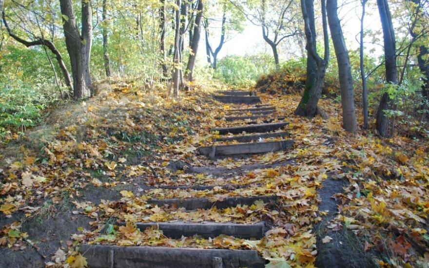 Kodėl rudenį lapuočiai meta lapus, o spygliuočiai lieka su spygliais?