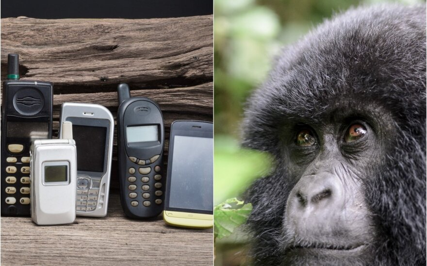 Seni mobilieji telefonai ir gorila
