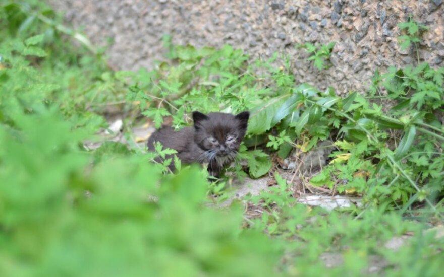 Musių puotos ir žmonių abejingumo istorija: padėkite mažiesiems kačiukams