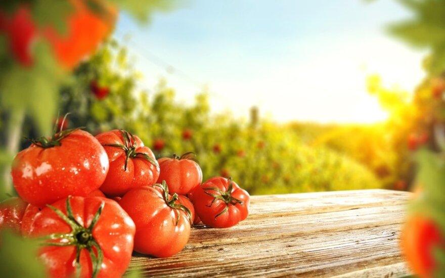 Patiko agurkai ir pomidorai – kaip paruošti jų sėklas kitam sezonui