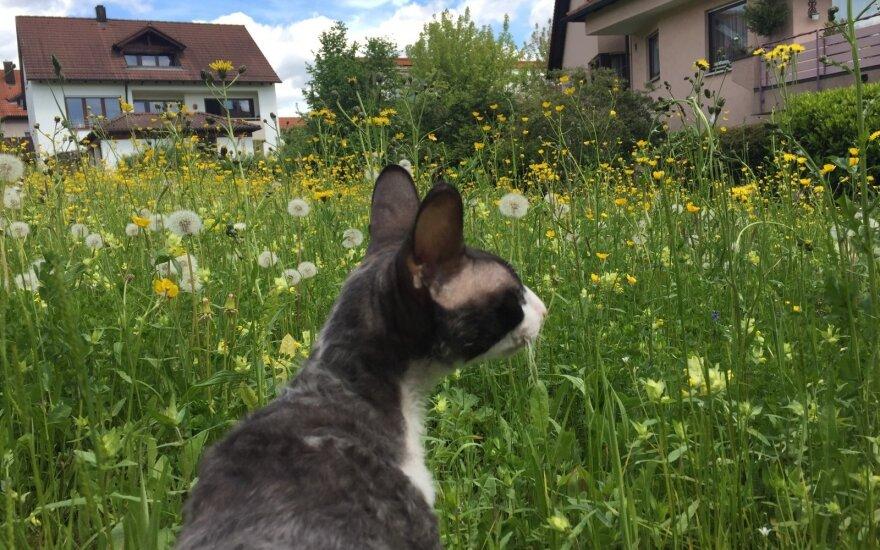 Į Vokietiją išsikrausčiusi pora išdrįso pasiimti ir katinus