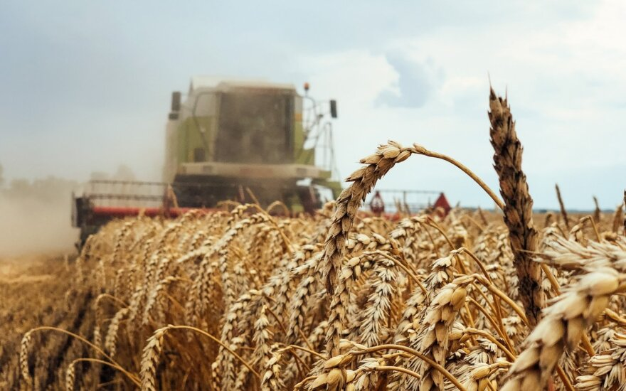 Dėl prasto derliaus iš vadovo reikalavo daugiau nei milijono eurų: teismas nusprendė kitaip