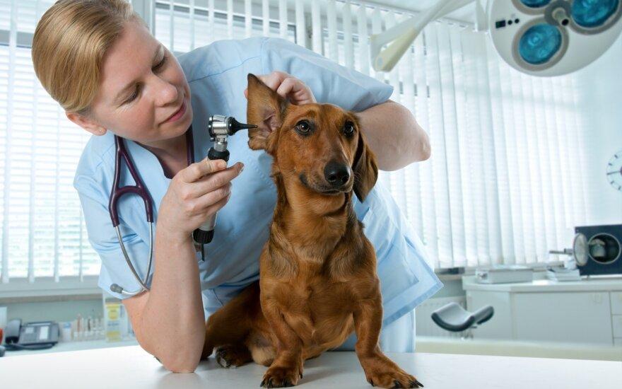 Šuo pas veterinarijos gydytoją