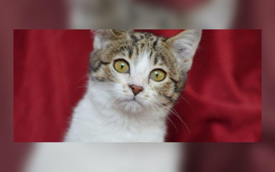 Du kačiukai - Gražuolė ir Rainiukas - svajoja apie tikrus namus!