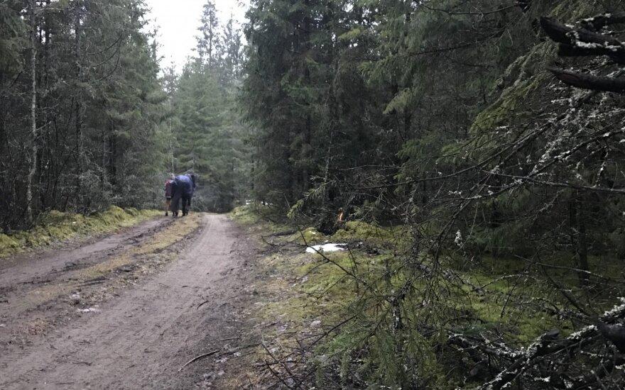 Kitokie pasivaikščiojimai. Miške – kartu su 700 kg sveriančiu keturkoju
