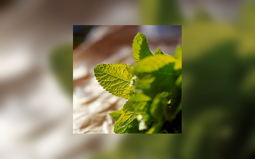 Vaistiniai augalai, raudonėlis
