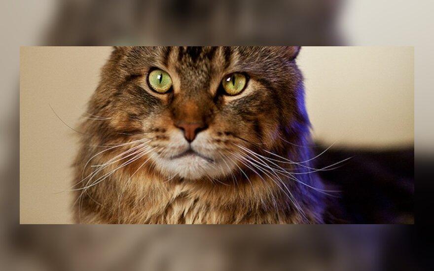 Miestiečiams – nemokama kačių paroda