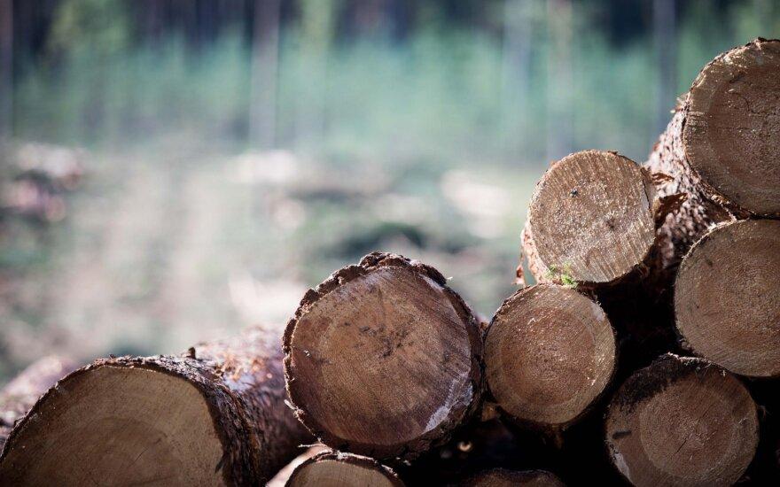 Dėl kritusių medienos kainų VMU pajamos šiemet mažės 36 mln. eurų