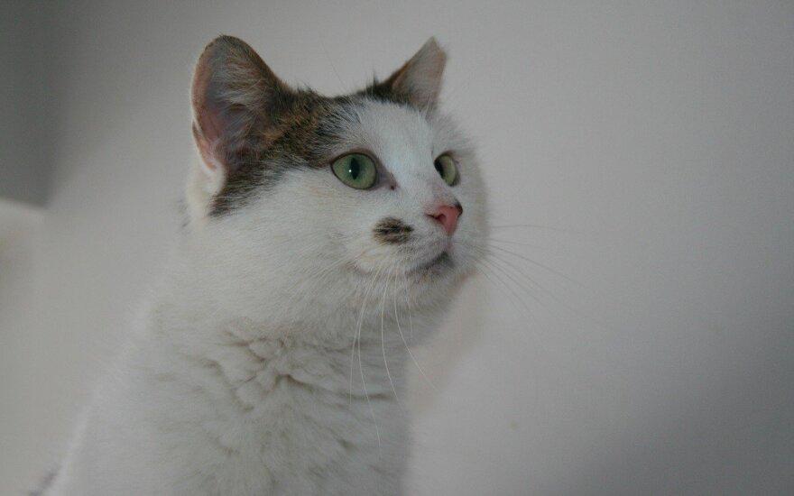 MiMi – katytė su apgamėliu