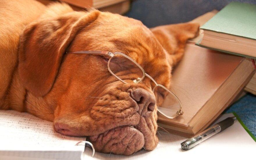 Ką šuo išduoda apie jūsų asmenybę?