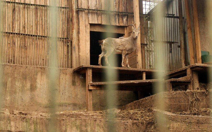 Laukia pokyčiai: siekiama gerinti laukinių gyvūnų laikymo nelaisvėje sąlygas