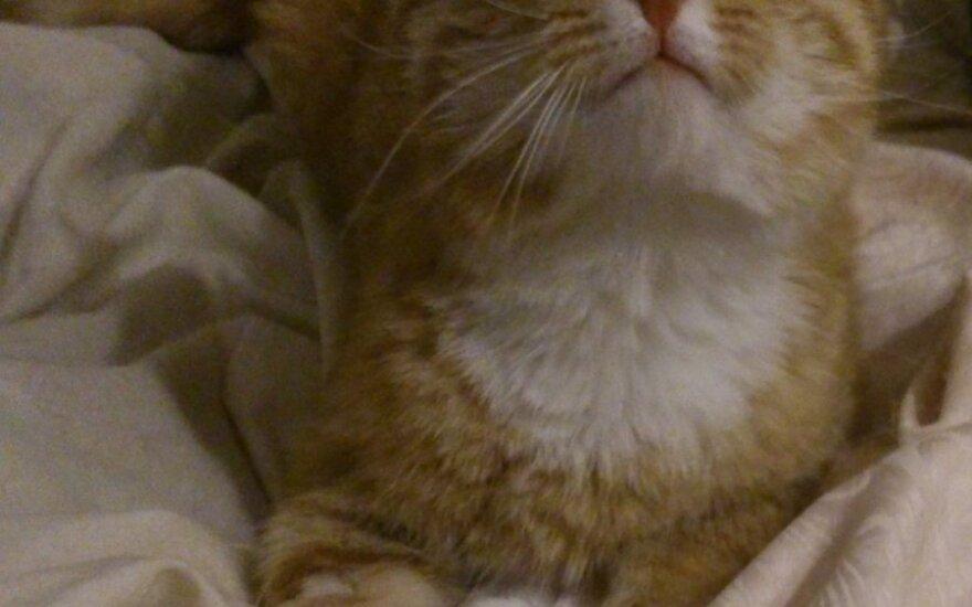 Bafas – oranžinis keistuolis