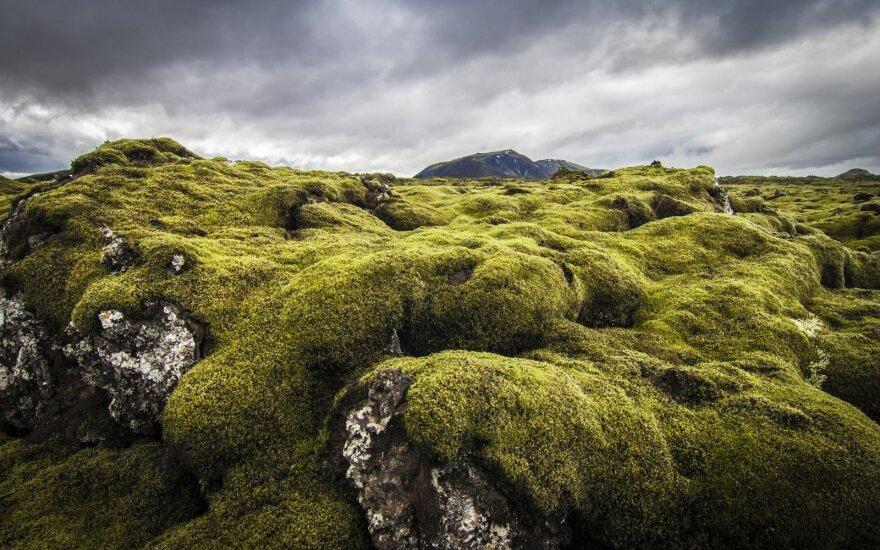 Islandijos lavos laukai