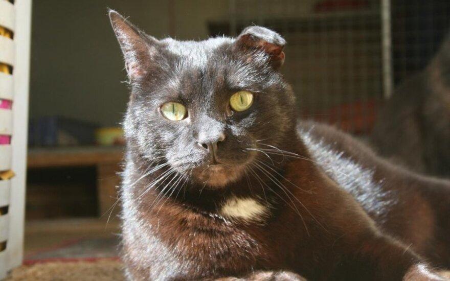 Lemūras – draugiškiausias katinėlis