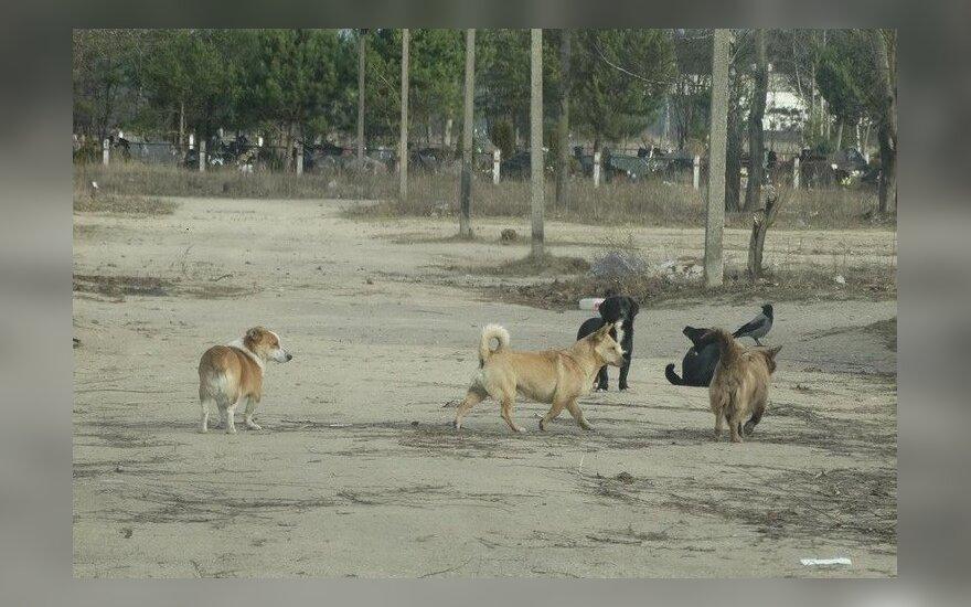 Benamiai šunys Alytuje