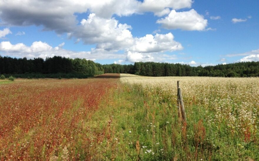 Lietuva - tikrai ne svajonių šalis