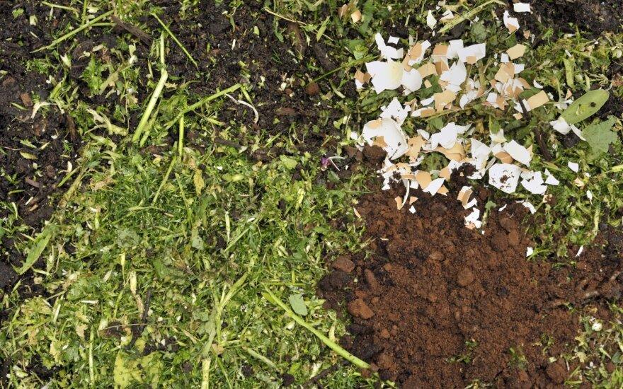 7 būdai nemokamai patręšti daržą