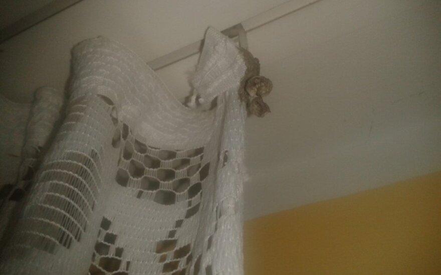 Būsto viduje rado širšės sukamą lizdą