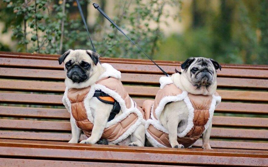 Šuniukų prieglaudos įkūrėja I. Pileckienė: augintinis nėra vienkartinis žaislas
