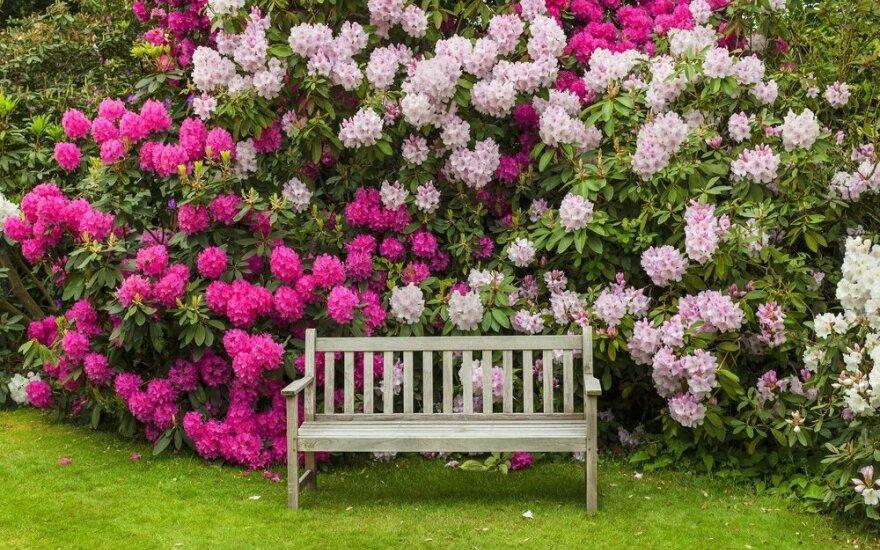 Ką gegužę dar galima nuveikti puoselėjant dekoratyvinius augalus