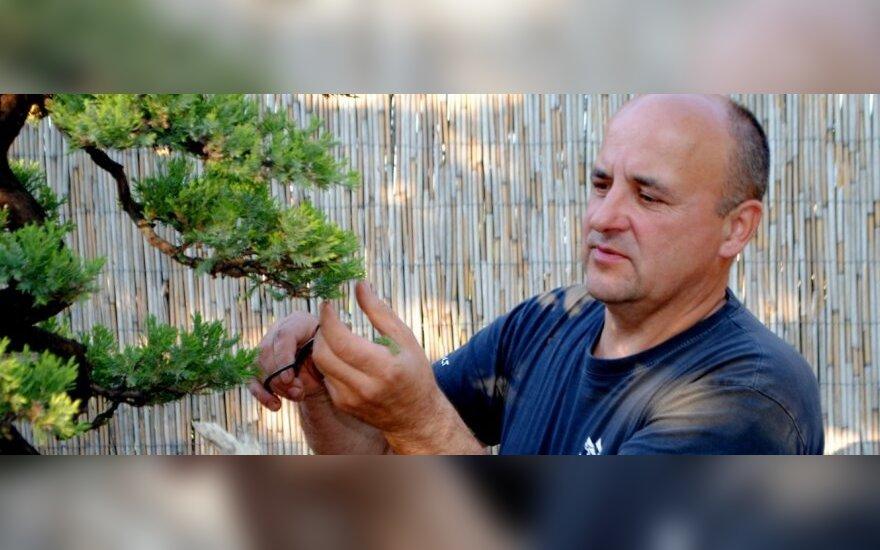 Į Kauną atkeliauja įspūdinga bonsai paroda