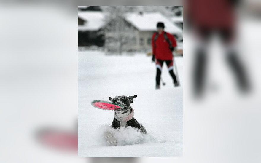šuo, sniegas, žiema