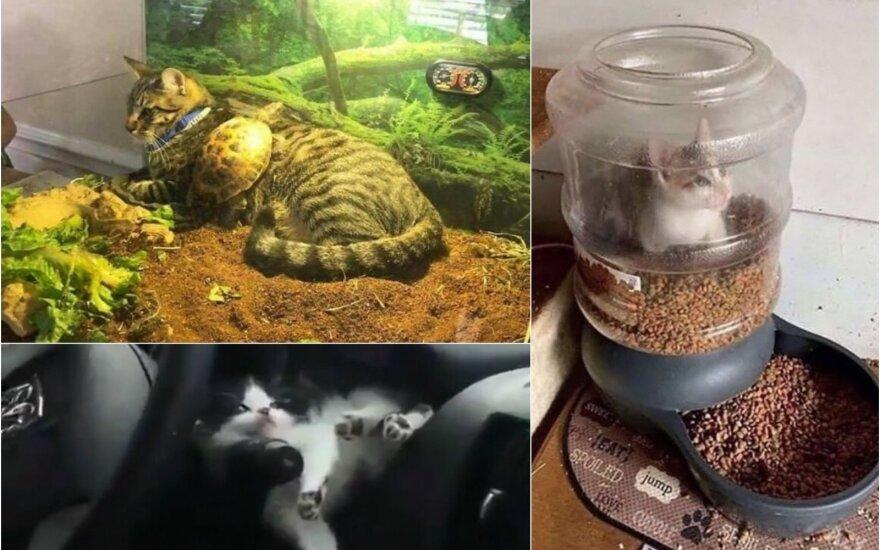 Katėms galima viskas