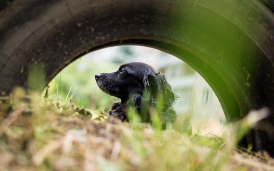Suprato, kurį šuniuką pasiimti, iš pirmo žvilgsnio