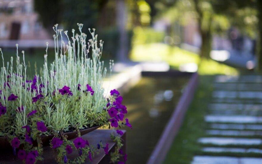 Patarimai kapų tvarkymui: 5 gražūs ir nereiklūs kiliminiai augalai