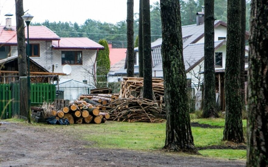 Krūvon sudėti miško savininko iškirsti medžiai