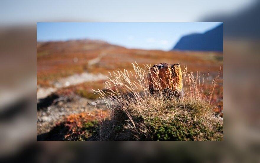 Egzotiškoje Laplandijoje šnabžda tundros vėjai