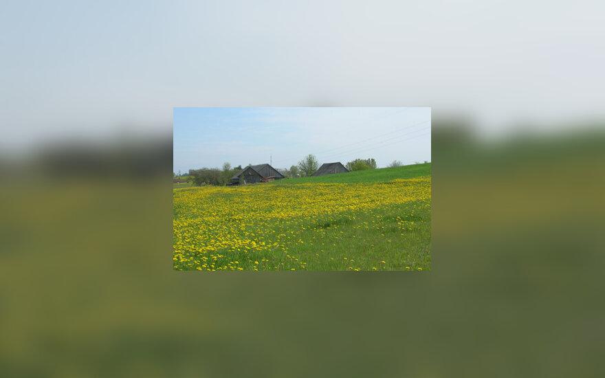 Kaimas, žemės ūkis, sodyba, pieva, laukas