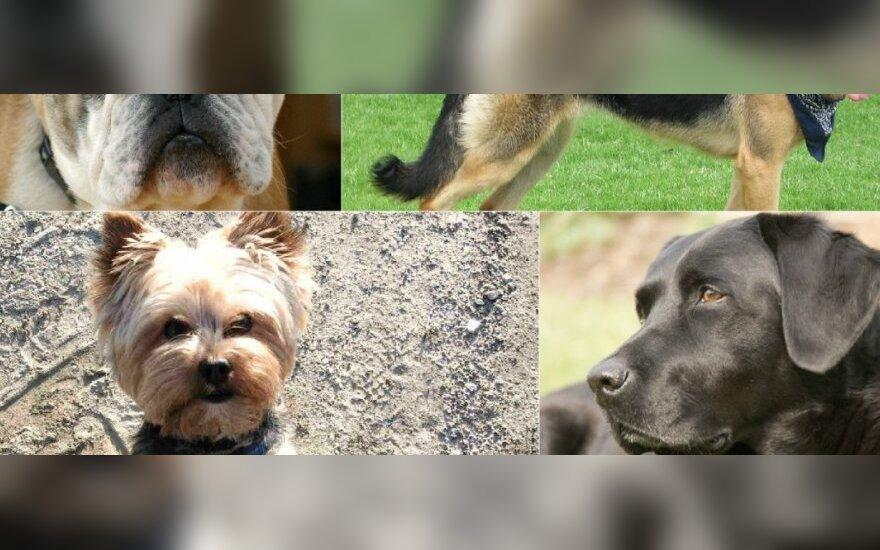 Populiariausios šunų veislės