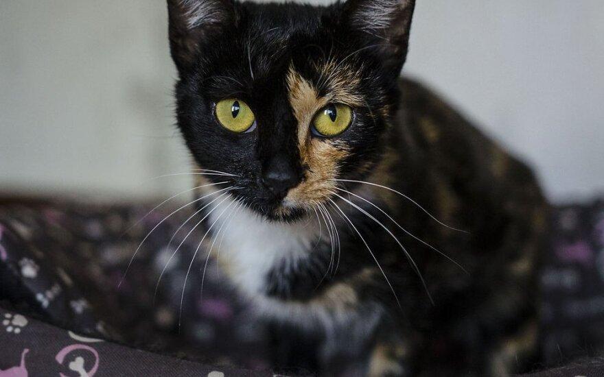 Pensininkas išgelbėjęs lauko katytę prašo pagalbos ir ieško jai namų!
