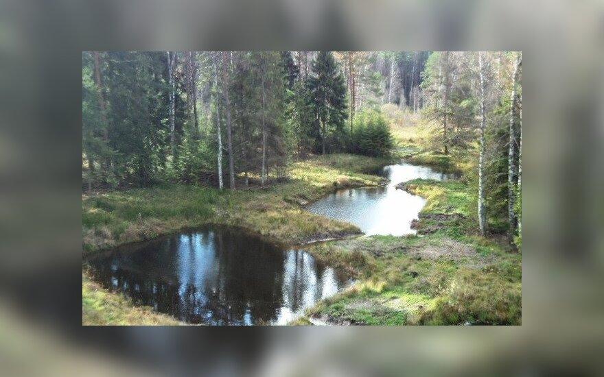 Stepono Vaitkaus miško valda. Lietuvos miško savininkų asociacijos nuotr.
