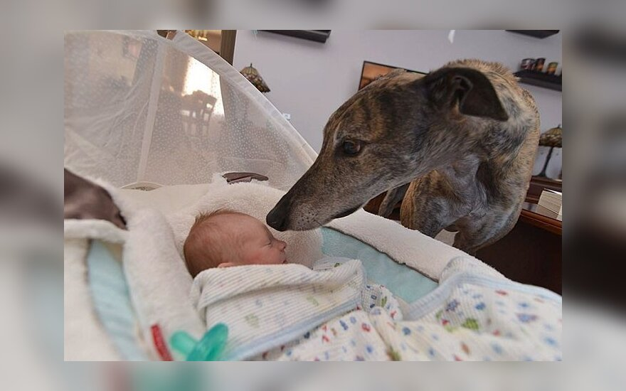Šuo susidraugavo su kūdikiu