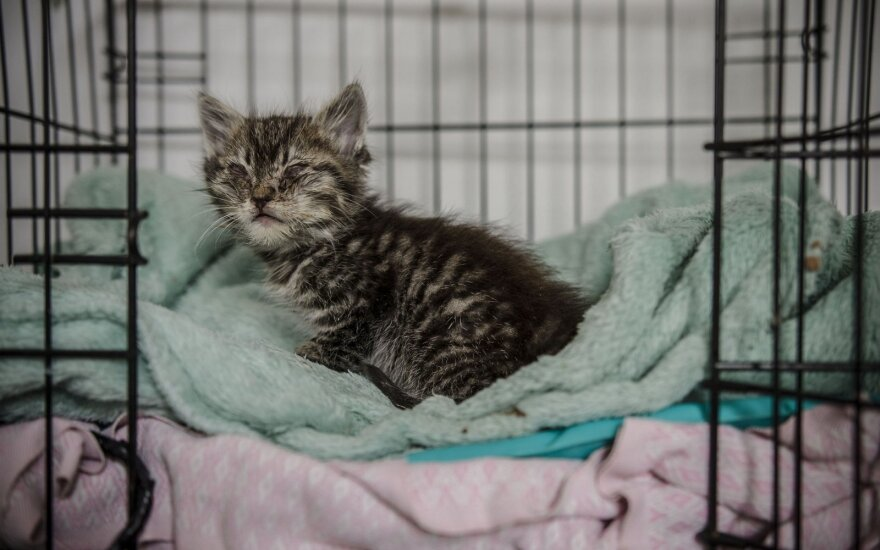 Ligos iškankintas kačiukas Špokas prašo žmonių pagalbos!