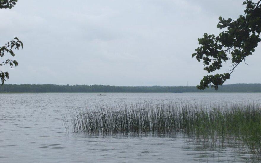 Stirnių ir Aiseto ežerai įžuvinti šamų jaunikliais