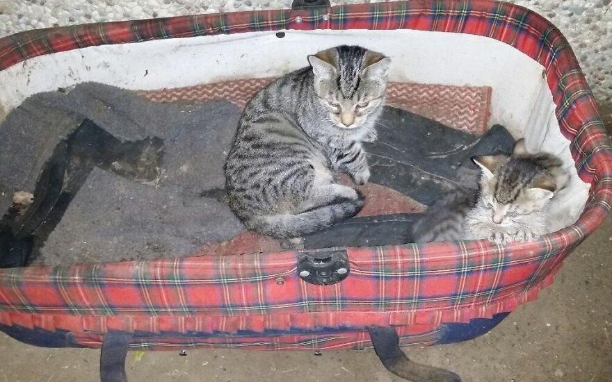 Reikalinga laikina globa katei su kačiukais