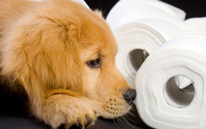 Kodėl šuo žiūri jums į akis, kai tuštinasi