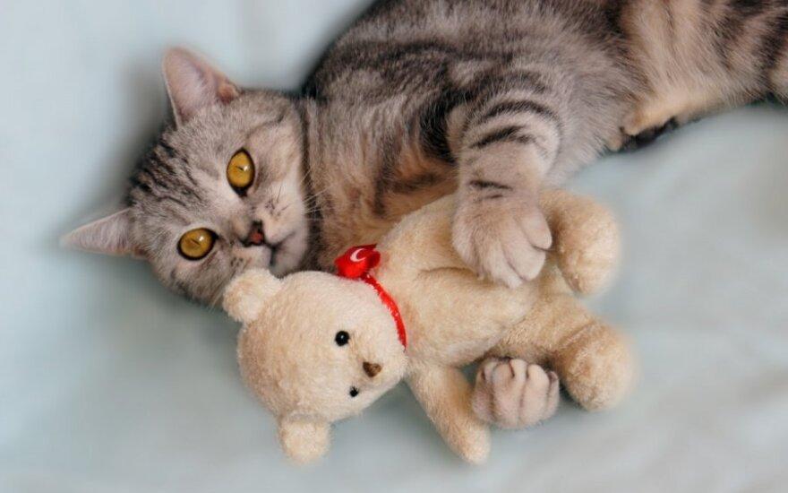 Kodėl katės murkia?