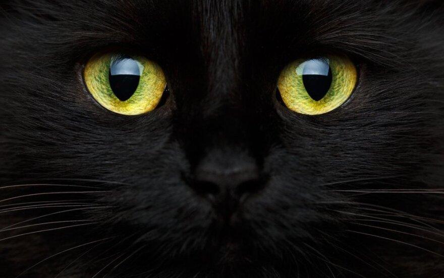 Jūsų naminis gyvūnas – energetinis vampyras?