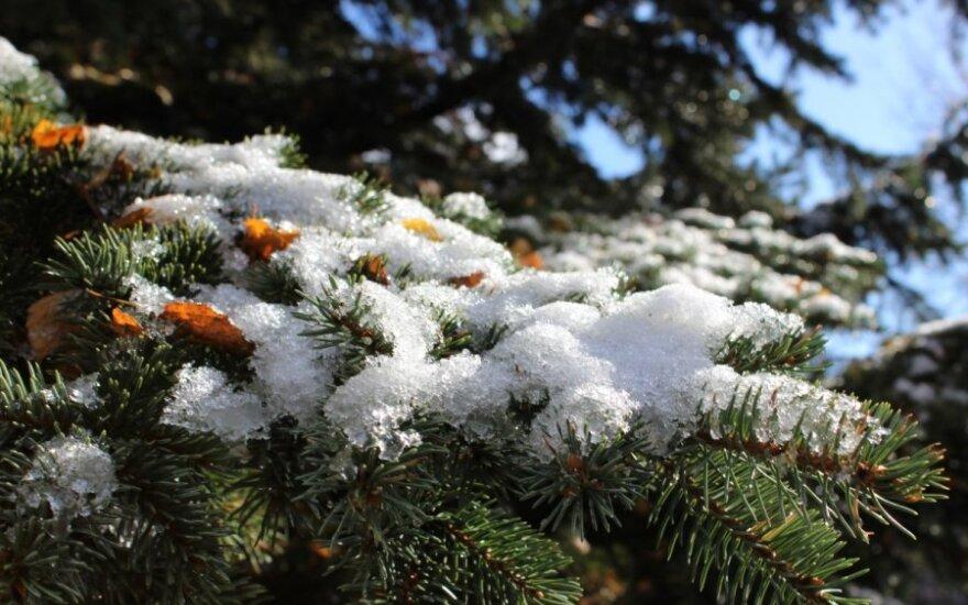Pirmasis sniegas pro langą / Dalios nuotr.