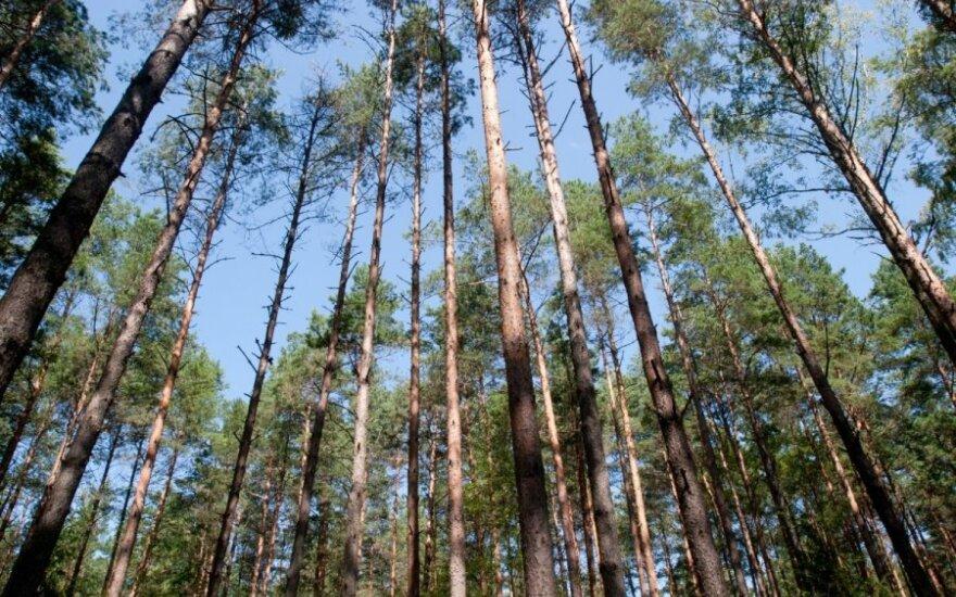Miškas (Asociatyviu nuotr.)