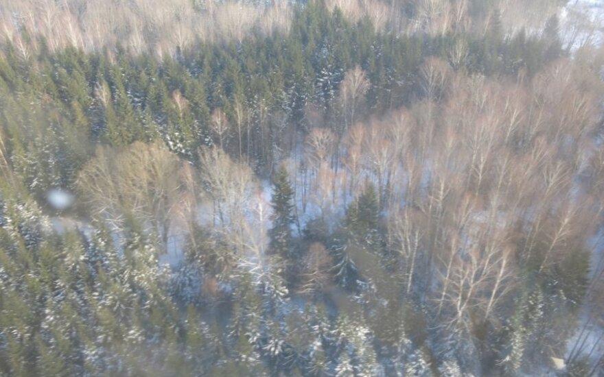 Valstybinės maisto ir veterinarijos tarnybos atstovai iš sraigtasparnio žvalgė Varčios mišką, kuriame masiškai krenta šernai